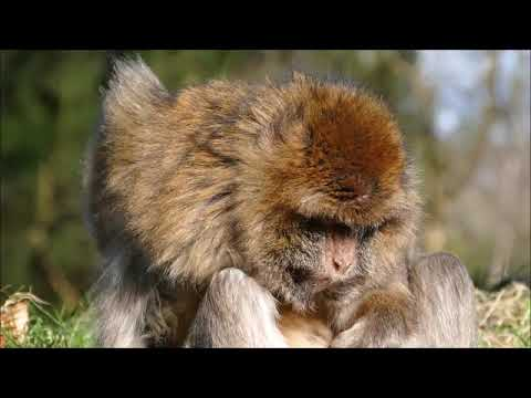 Murzikland в краю обезьян