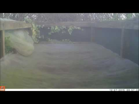 Robert E Fuller: Watch this stoat on my garden trampoline