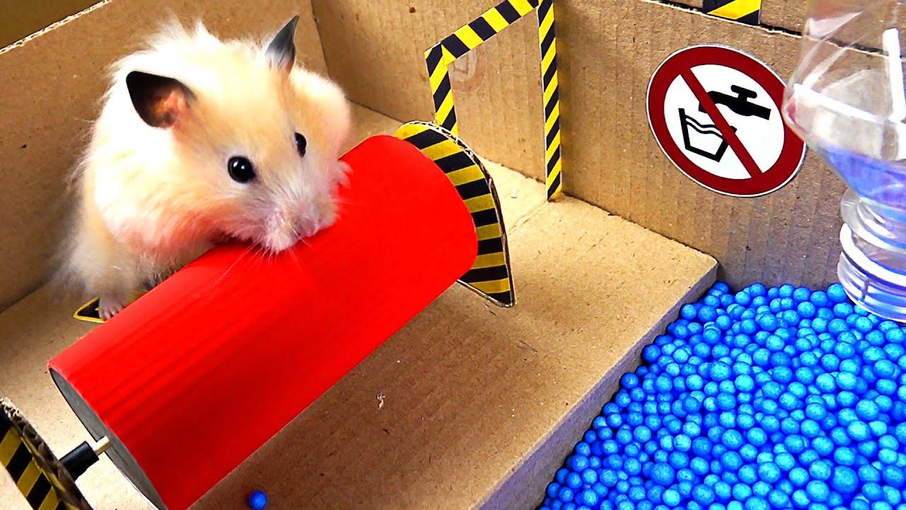 Epic Hamster Maze - скачать с YouTube бесплатно