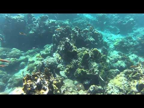 Santiago de Cuba - Visite du récif de corail