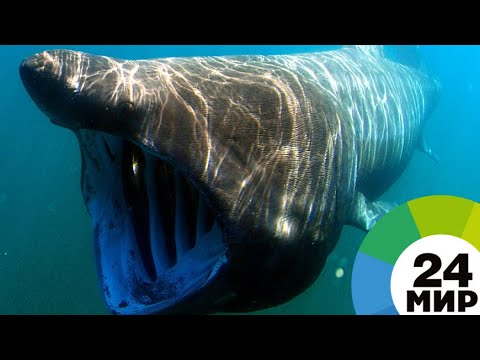 Акула едва не откусила ногу поймавшему ее рыбаку (ВИДЕО)