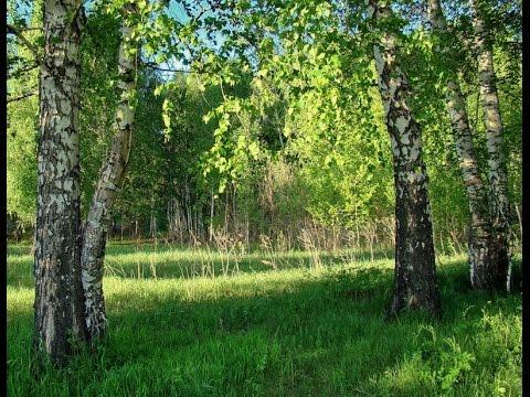 Красивые летние пейзажи