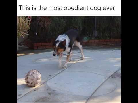 Smartest Dog Ever