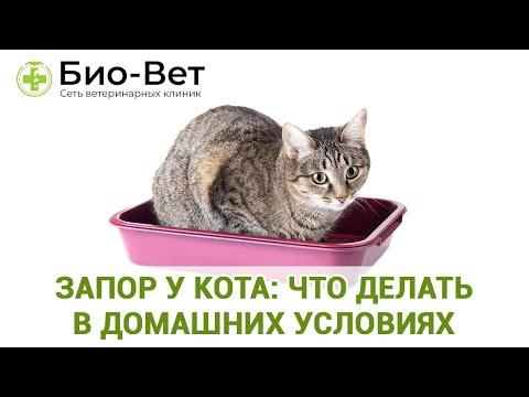 Как лечить запор у кошки