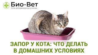 як правильно зробити клізму кошеняті