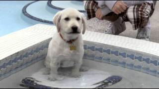 Marley & Me The Puppy Years - Trailer