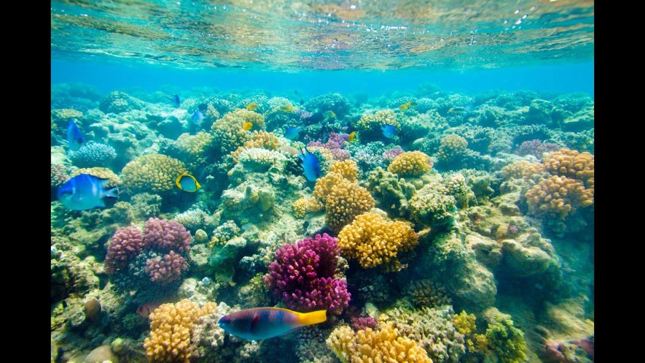 красного моря картинки