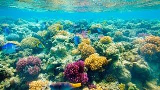 Красивые рыбки Красного моря на пляже отеля Sunwing Waterworld Makadi 5* (Египет, Хургада)