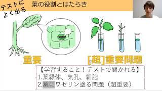 中1理科 植物(13)葉のつくりpart1.