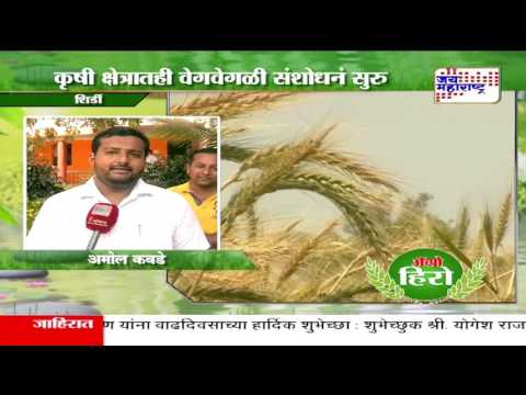AGRO HERO - FARMER SUCCESS STORY OF WHEAT PRODUCTION IN SHIRDI