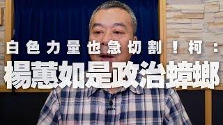 '19.12.06【小董真心話】白色力量也急切割!柯:「楊蕙如是政治蟑螂」