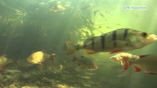 Fische in ihren Lebensraum