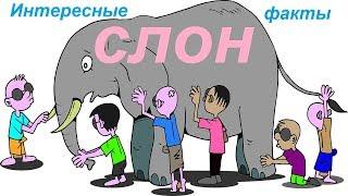Слон.Символ слон. Интересные факты|Энергия жизни