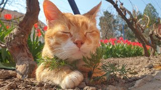 Relaxing Cat Video 90