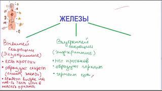 Классификация желез внутренней секреции