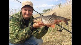 #26 Новое Место Разклевалось Рыбалка на Реке Волге Береговая Ловля Голавля на Донку Фидер