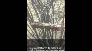 Busy Platform Bird Feeder With Chickadees And Titmice Feeding