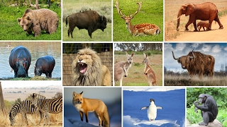 Wild Animals Name and Sound For Kids Fun Educational Learning Video with Old MacDonald Song