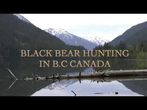 BLACK BEAR HUNTING IN B.C CANADA