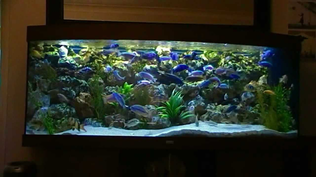 African malawi cichlid fish tank aquarium 450l phase 2 for Youtube fish tank