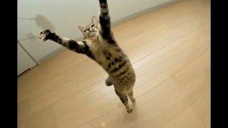 Замедленная съёмка прыжков котов
