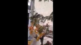 Видео на телефон Sumsung(, 2015-11-26T15:06:06.000Z)