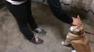 群馬県で犬のしつけ方教室・幼稚園を運営しているドッグトレーニングア...