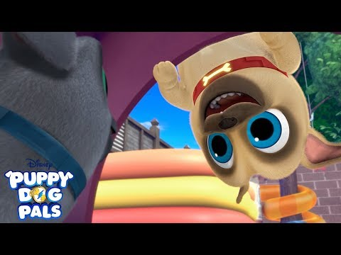 Bingo and Rolly's Favorite Music Videos! | Compilation | Puppy Dog Pals | Disney Junior