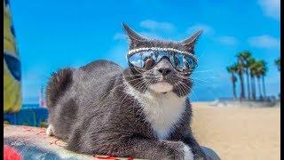 ПРИКОЛЫ С КОТАМИ 2019 - Смешные коты и кошки - Приколы с котами до слез | ПОПРОБУЙ НЕ ЗАСМЕЯТЬСЯ!