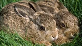 Картинки с зайцами