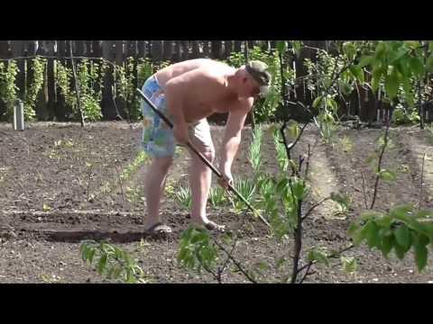 Как посеять семена помидор в открытый грунт. Посев томатов на грядке