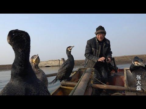 河南南阳最后的鱼鹰捕鱼人 每天捕鱼几百斤 赚钱全靠这几只水鸟