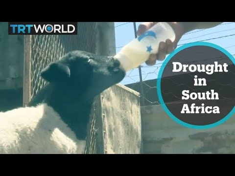 Farmers struggle amid drought in South Africa