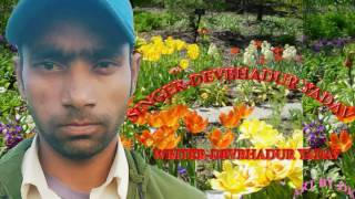Aake Maara Taru Line- Devbahadur yadav