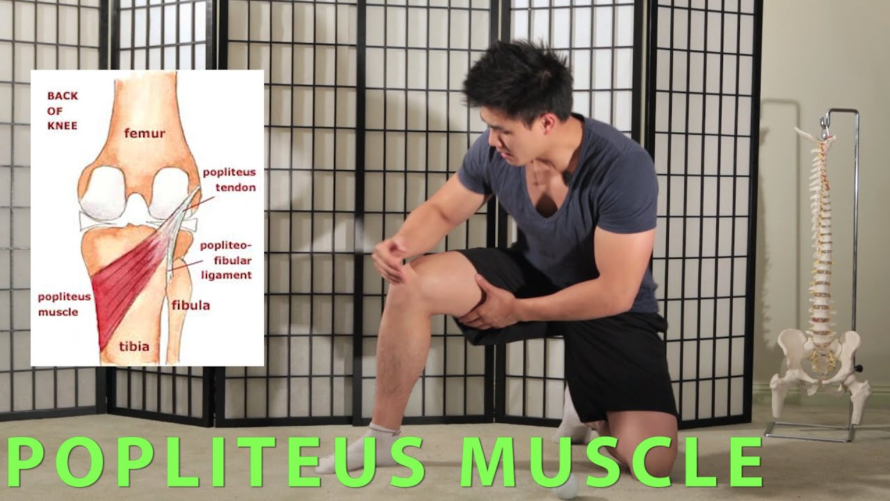 Posterior Knee Massage Pain And Mobility Popliteus Youtube