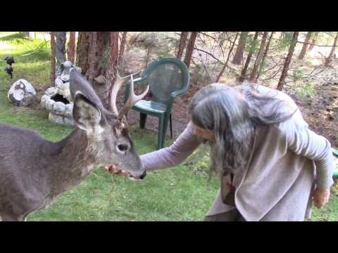 Yoda, a friendly Wild Deer Buck