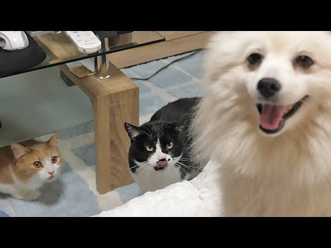 Our cats meet a dog