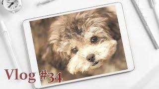 [브이로그 191014]  애견유치원, 강아지들의 일상…