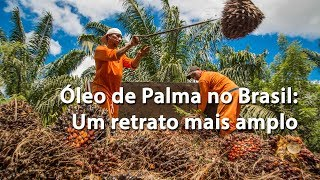 Óleo de Palma no Brasil: Um retrato mais amplo