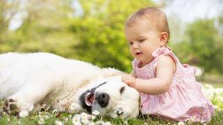 Bebês bonitos que jogam com cães Labrador - Cães do amor bebês Compilation [HD VIDEO]