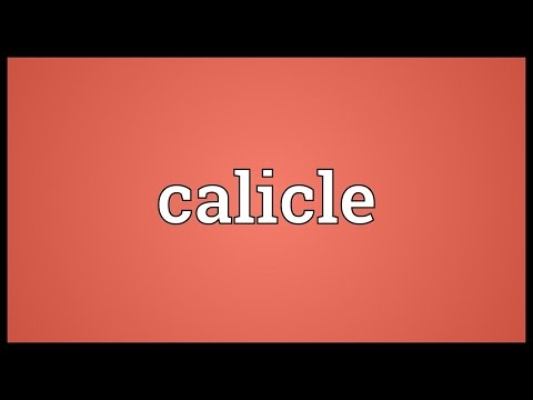 Header of calicle
