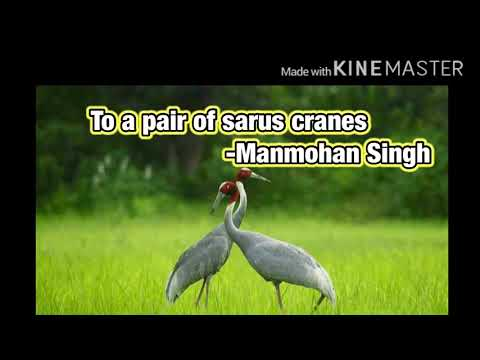 To a pair of sarus cranes poem  explanation   poem analysis   Class 10 sslc poem   sarus cranes poem
