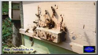 Весенняя работа на пасеке: настройка летков (видеоурок). Пчеловодство для начинающих