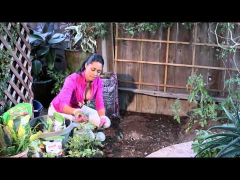 How to Plant Tomatoes Using Bone Meal, Sugar & Epsom Salts : The Chef's Garden