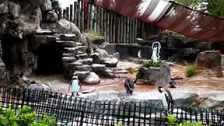 【東武動物公園】グレープ君をタイムラプス で見てみよう