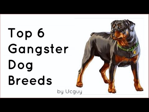 Top 6 Gangster Dog Breeds | 2018 Special