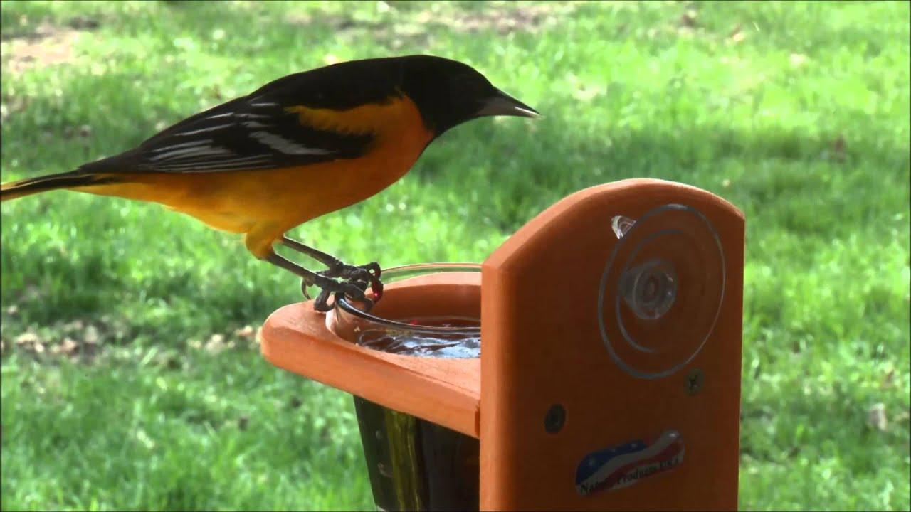 built shop feeder best songbird p usa essentials back oriole bird cedar