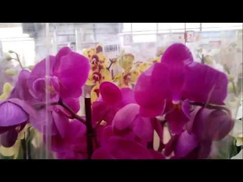 Выбираем Фаленопсис красного цвета во Флосе