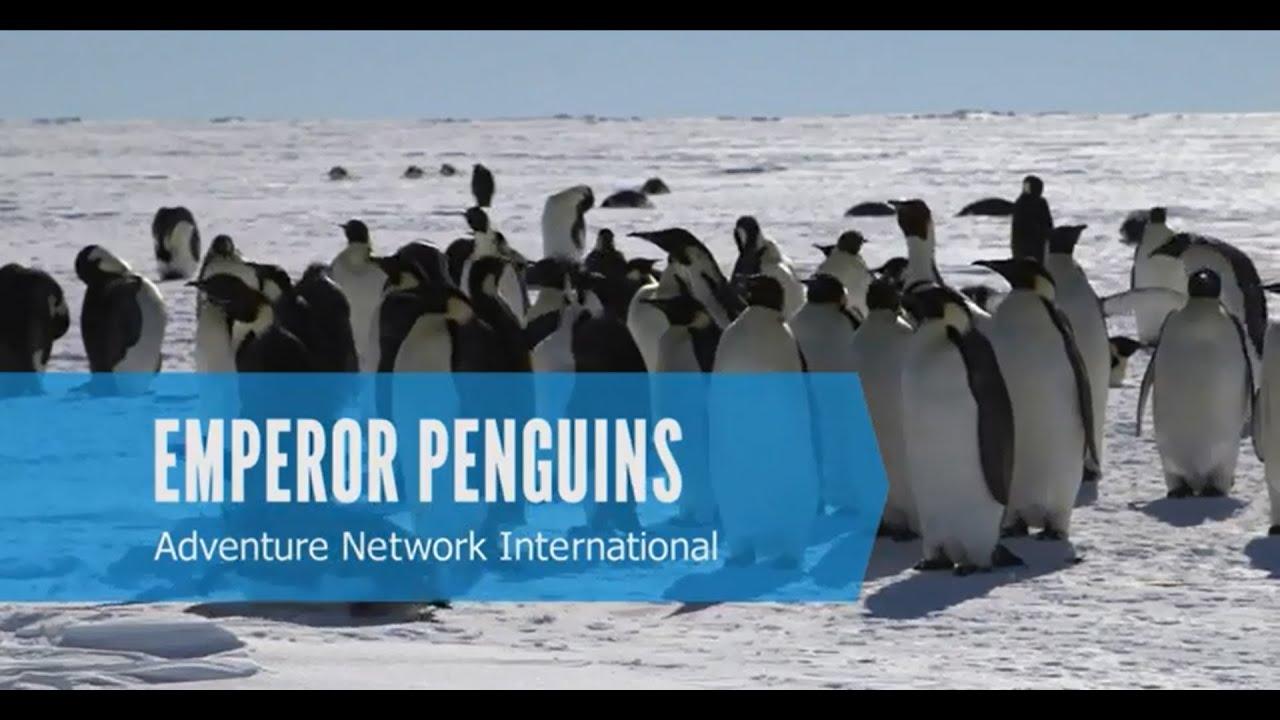 【動画】コウテイペンギンの営巣地を訪ねる旅