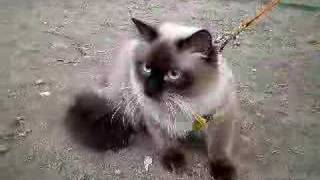 Маша и Наташа выгуливают несчастного кота